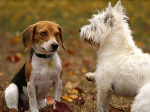 Socialisation in dogs