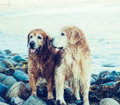Dogs socialising